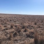 Land Auction in Oklahoma